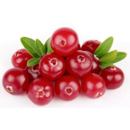 frutto di mirtillo rosso utile per una prevenzione delle cistiti