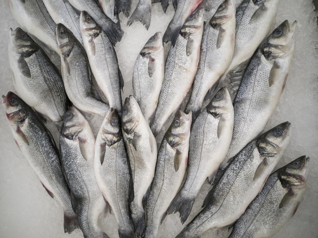 pesce azzurro che contiene omega 3