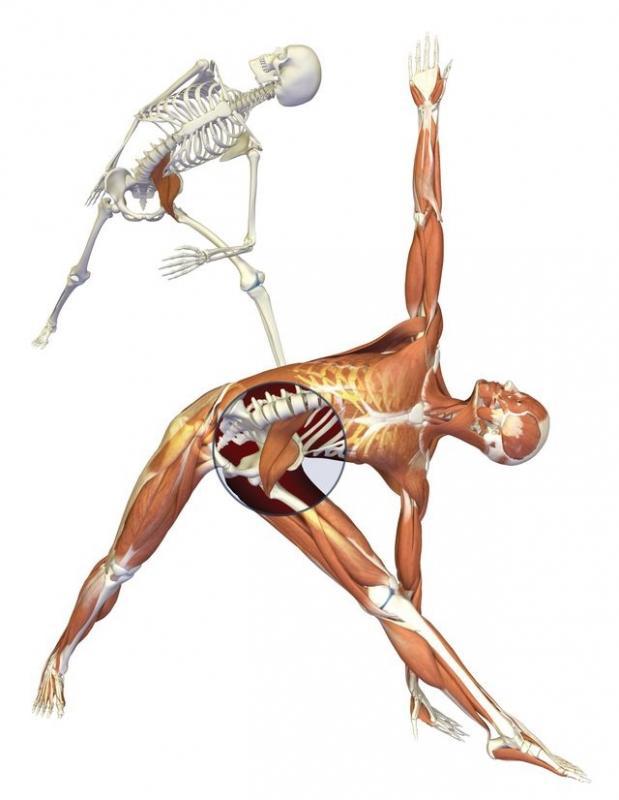Muscolo ileo psoas durante un movimento del corpo
